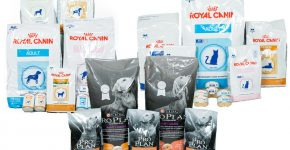 Корма Pro Plan и Royal Canin