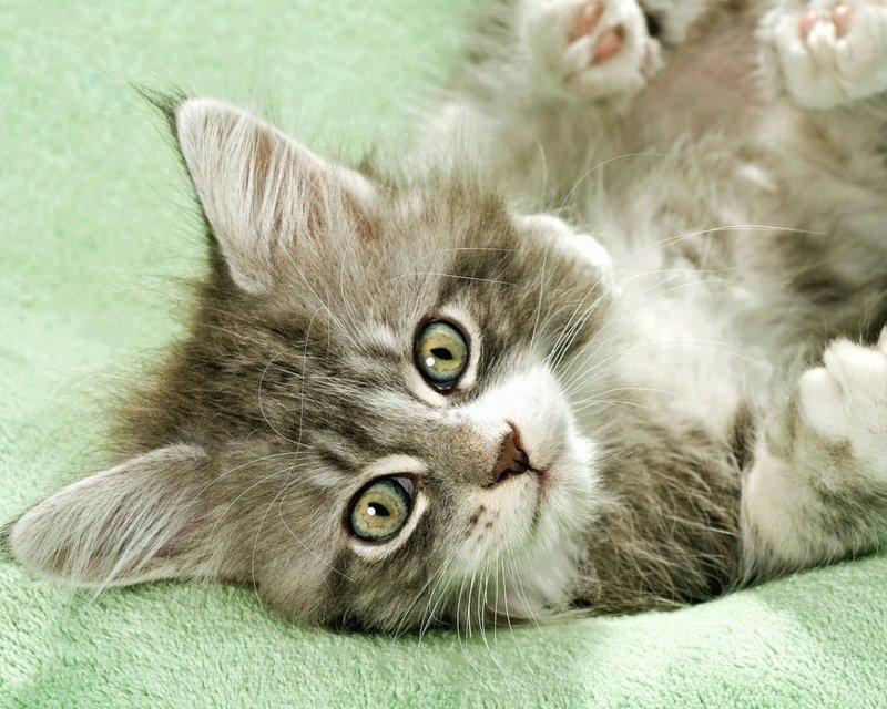 Препараты используемые при лечении запора у кошки