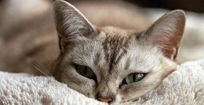 уход за кошкой после кастрации
