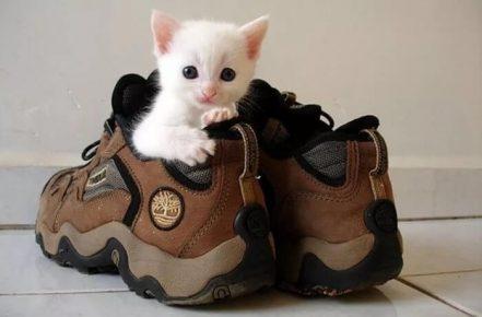 Котёнок в кроссовке