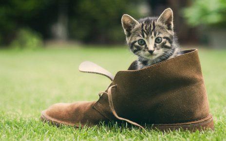 Кот в ботинке