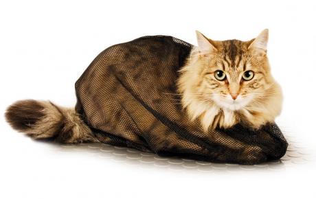 Кот в защитном мешке