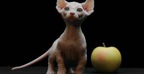 Мини-кошка