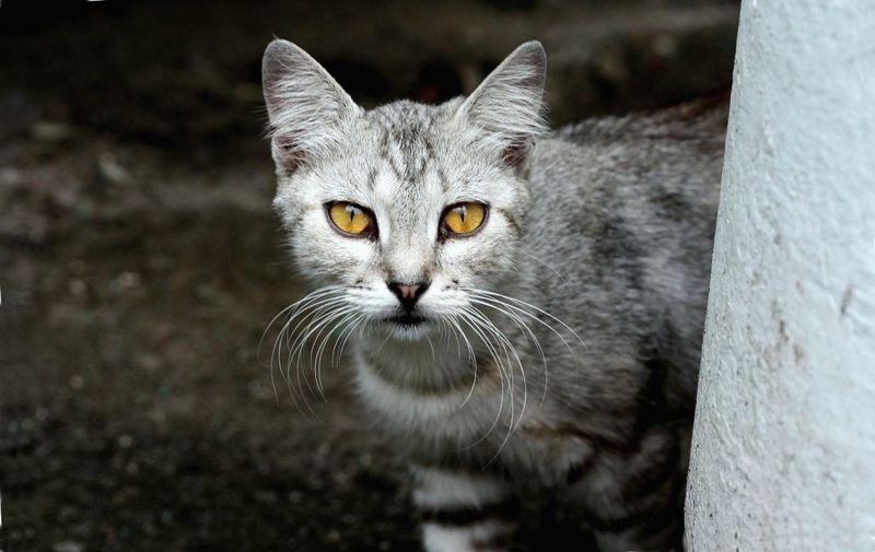 У кошки на глазах третье веко лечение