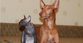 Сфинкс и собака