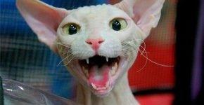 Сфинкс улыбается