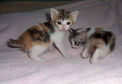 Трёхнельные котята
