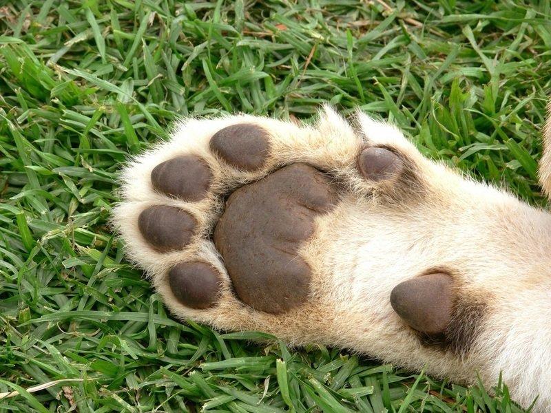 Страшные последствия операции мягкие лапки удаление когтей у котов