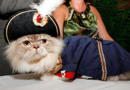 Наполеон в костюме