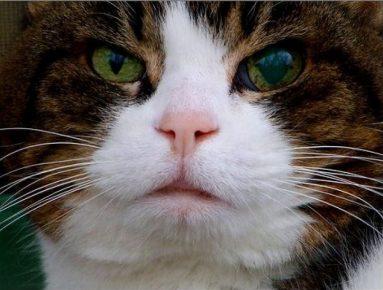 Расширение зрачка у кошки