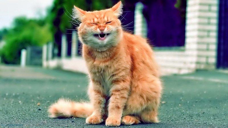 Кот чихает причины и помощь питомцу