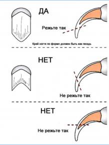 Как резать когти кошке