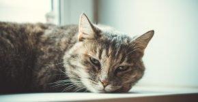 кошка красивая