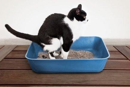 Кот опорожняется в лоток