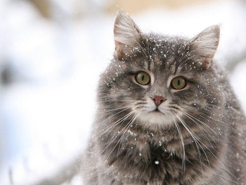 Лигфол для кошек способ применения Побочные действия лигфола для кошек