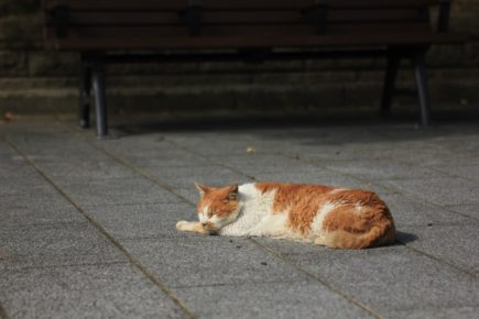 Кошка спит на земле