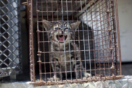 Приютский котёнок