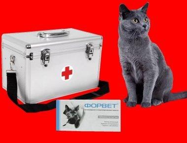 Кот, аптечка и Форвет