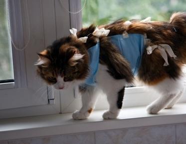 Кошка в бандаже