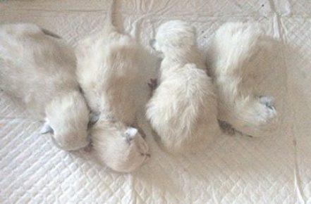 Новорождённые котята