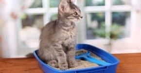 Котик на лотке