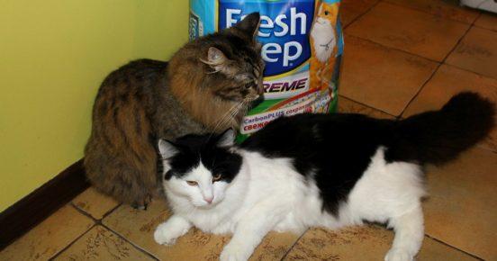 Коты и наполнитель