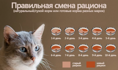 Правильная смена рациона кошки