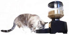 Автокормушка для кошки