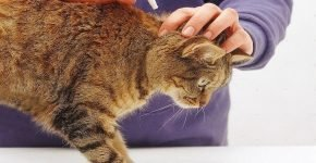 Капли на холку для кошек