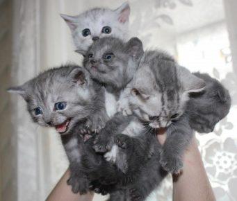 Котята в руках человека