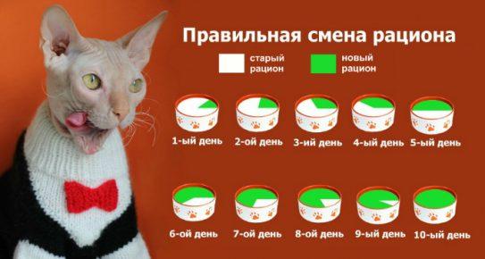 Как перевести кошку на другой корм