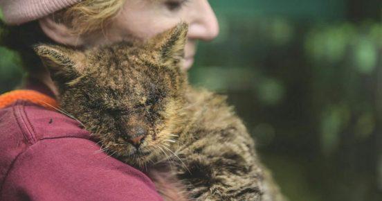 Кошка, заражённая подкожным клещом