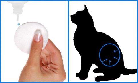 Схема обработки кошки Амитразином