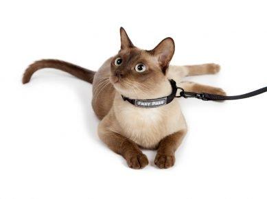 Кошка в поводке
