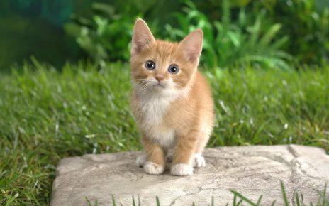 Рыжий котёнок стоит на камне