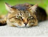 Заболевания глаз у котов