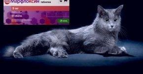Марфлоксин и кот нибелунг
