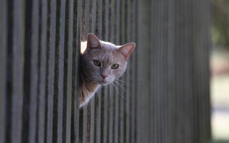 Кот и забор