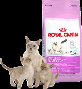 Корм для кормящих кошек и котят