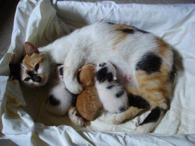 Кошка с котятами в гнезде