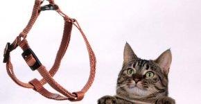 Амуниция нужна не только собакам, но и кошкам