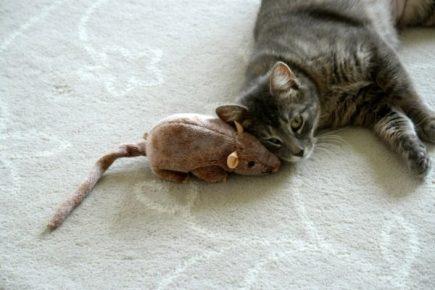Кот и мышка-игрушка