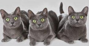 Котята кората