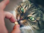 Даем кошке таблетку