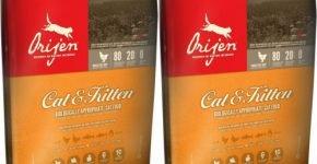 Оrijen Cat&Kitten