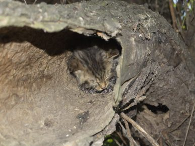Дикий котёнок в «гнезде»