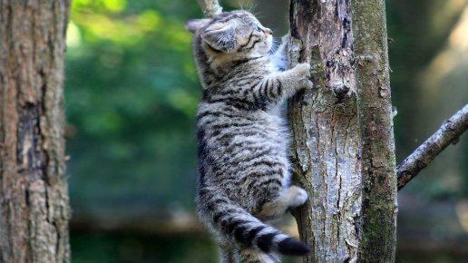 Молодой лесной кот