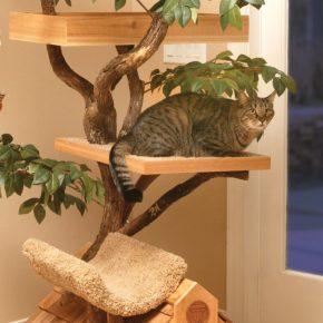 Кошачье дерево