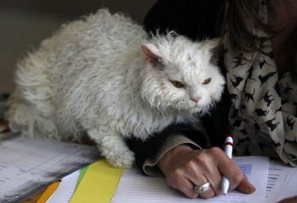 Белый кот с хозяйкой