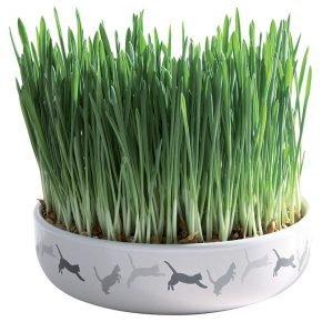 Зелёная травка